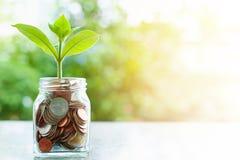 Plantez l'élevage des pièces de monnaie dans le pot en verre sur le natur vert brouillé Images stock