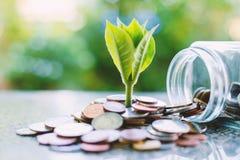 Plantez l'élevage des pièces de monnaie en dehors du pot en verre sur le vert brouillé Photos stock