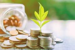 Plantez l'élevage des pièces de monnaie en dehors du pot en verre sur le vert brouillé Image libre de droits