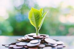 Plantez l'élevage des piles d'argent sur le backg naturel vert brouillé Images stock