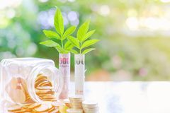 Plantez l'élevage du billet de banque, argent de devise de baht thaïlandais avec des pièces de monnaie Image stock