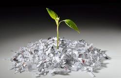 Plantez l'élevage du papier déchiqueté Photos stock