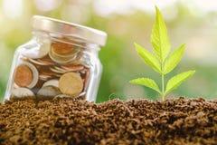 Plantez l'élevage du sol avec la pièce de monnaie dans le pot en verre Images stock