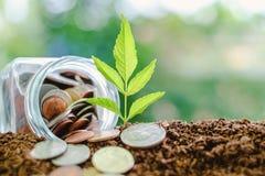 Plantez l'élevage du sol avec la pièce de monnaie dans le pot en verre contre le blurr Photos libres de droits