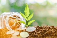 Plantez l'élevage du sol avec la pièce de monnaie dans le pot en verre contre le blurr Photographie stock libre de droits