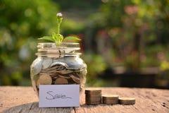 Plantez l'élevage hors des pièces de monnaie pour sauvent l'argent et le concept financier Photo libre de droits