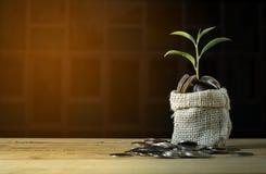 Plantez l'élevage sur la pile de pièce de monnaie courtisent dessus la table Photos stock