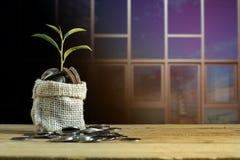 Plantez l'élevage sur la pile de pièce de monnaie courtisent dessus la table avec le fond de bâtiment Image libre de droits