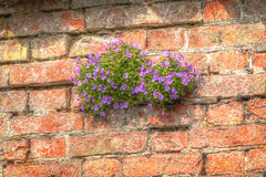 Plantez l'élevage sur le mur Photo stock