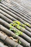 Plantez l'élevage sur un toit en bambou, style de porcelaine Photographie stock libre de droits