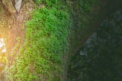 Plantez la lueur au-dessus de l'environnement humide d'humidité de forêt tropicale d'arbre photos libres de droits