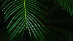 Plantez la paume avec la tige de long vert, photographie en gros plan clips vidéos
