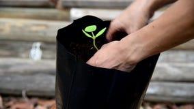 Plantez le jeune arbre dans des sacs de culture banque de vidéos