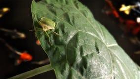 Planthopper Stockbild