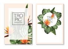 Plantilla botánica de la tarjeta de la invitación ilustración del vector