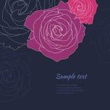 Plantilla color de rosa del fondo del vector Imagenes de archivo