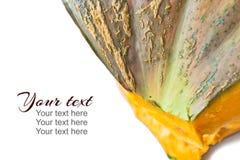 Plantilla con cierre para arriba de la textura de una calabaza Otoño relacionado fotos de archivo libres de regalías