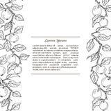 Plantilla con las ramas de la manzana Fotografía de archivo libre de regalías