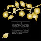 Plantilla con las ramas de oro de la manzana Imagen de archivo libre de regalías