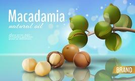 Plantilla cosmética realista del anuncio de la cáscara del aceite de nuez de macadamia 3d La rama sale de la cáscara de nuez Cuid Ilustración del Vector
