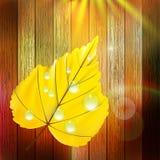 Plantilla de Autumn Leaf EPS10 más Fotos de archivo libres de regalías