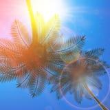 Plantilla de Autumn Leaf EPS10 más Imagenes de archivo