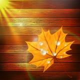 Plantilla de Autumn Leaf EPS10 más Fotografía de archivo libre de regalías