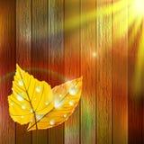 Plantilla de Autumn Leaf EPS10 más Imágenes de archivo libres de regalías