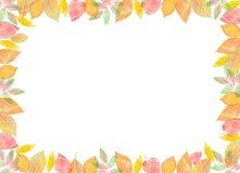 Plantilla de la caída Hojas de otoño coloridas brillantes en fondo blanco horizontal Imagenes de archivo