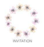 Plantilla de la guirnalda del vector del flor de Sakura Imagen de archivo libre de regalías