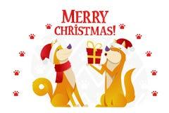 Plantilla de la postal de la Feliz Navidad con dos perros amarillos lindos con el regalo rojo en el fondo blanco La historieta de Imagen de archivo libre de regalías