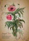 Plantilla de la tarjeta de felicitación con el ramo de amapolas rojas Imagen de archivo libre de regalías