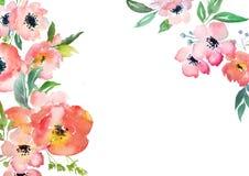 Plantilla de la tarjeta de las rosas de la acuarela Foto de archivo