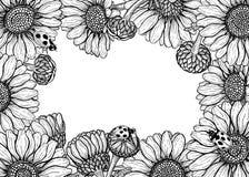 Plantilla de la tarjeta del marco de las flores de la margarita ilustración del vector