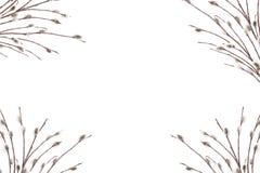 Plantilla de la tarjeta de la primavera Posición plana de ramas de florecimiento respecto a un fondo blanco Tarjeta del día de fi libre illustration