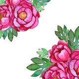 Plantilla de las flores de la peonía del rosa de la acuarela libre illustration