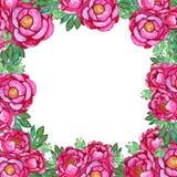 Plantilla de las flores de la peonía del rosa de la acuarela stock de ilustración