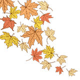 Plantilla de las hojas de otoño del color Foto de archivo