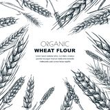 Plantilla del diseño de la etiqueta de la harina de trigo Ejemplo del vector del bosquejo de los oídos del cereal Fondo del paque stock de ilustración