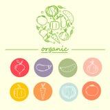 Plantilla del diseño del logotipo del vector con los iconos vegetales en estilo linear de moda Imagen de archivo