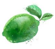 Plantilla del diseño del logotipo del vector de la cal fruta o comida stock de ilustración