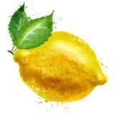 Plantilla del diseño del logotipo del vector del limón comida o fruta Foto de archivo libre de regalías