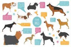 Plantilla del gráfico de la información del perro ilustración del vector