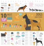 Plantilla del gráfico de la información del perro Cuidado de Heatlh, veterinario, nutrición, exhibiti stock de ilustración