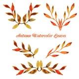 Plantilla del modelo de la hoja de la acuarela del otoño del vector Imagen de archivo