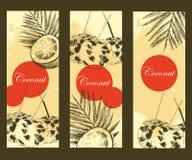 Plantilla dibujada mano de la bandera del diseño del coco Ejemplo tropical de la comida del bosquejo del vector retro del estilo Imagen de archivo libre de regalías