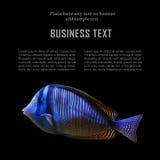 Plantilla exótica de la tarjeta de los pescados Foto de archivo libre de regalías