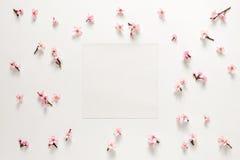 Plantilla floral de la tarjeta de felicitación de la primavera Foto de archivo libre de regalías