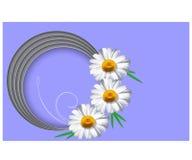Plantilla horizontal de la tarjeta de felicitación con el ejemplo del vector de la flor de la margarita stock de ilustración
