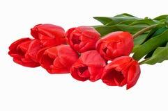 Plantilla vacía para el diseño festivo estacional, carteles, saludos, tarjetas de la primavera Flores rojas de los tulipanes en u fotos de archivo libres de regalías